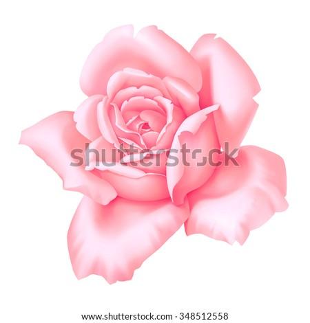 Rose pink flower decorative vintage illustration isolated on white background - stock photo