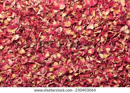 Rose Red Petal - stock photo