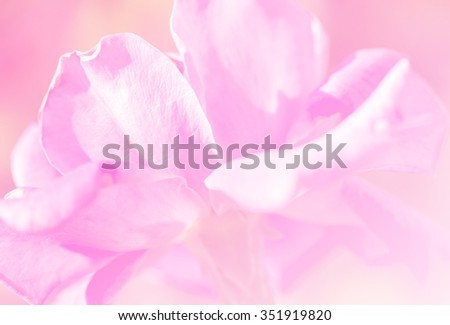 Rose soft pink blur background.