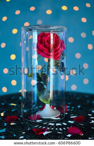 Rose Under Glass The Beauty And Beast