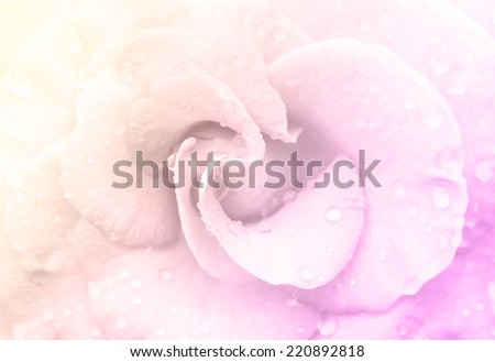 Rose with water drops made with color filters. - stock photo