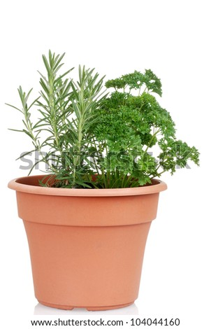 Rosemary and parsley in a pot - stock photo