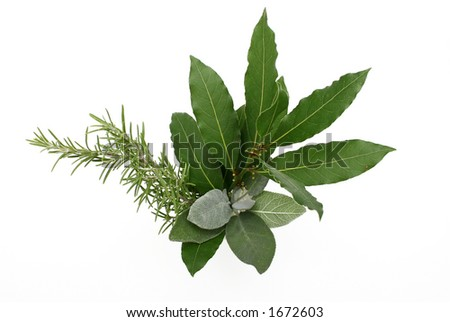 Rosemary, bay laurel and sage, isolated