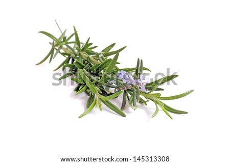 Rosemary branch with flowers - stock photo