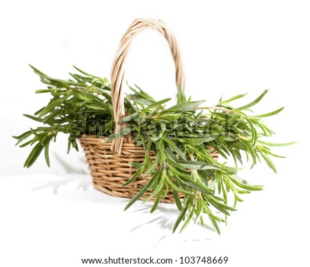 Rosemary bunch in the basket on the white background