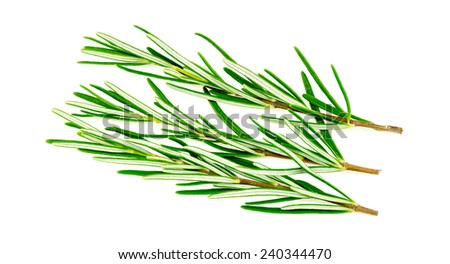 Rosemary herb isolated on white - stock photo