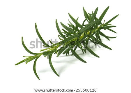 Rosemary herb on white background - stock photo