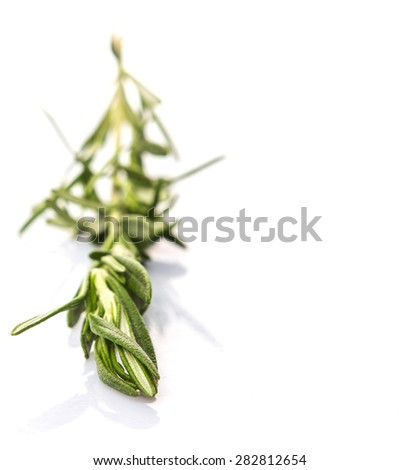 Rosemary herbs over white background - stock photo