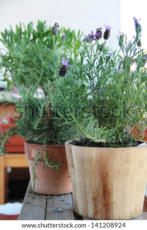 Rosemary, lavender and other herbs in the pot - stock photo