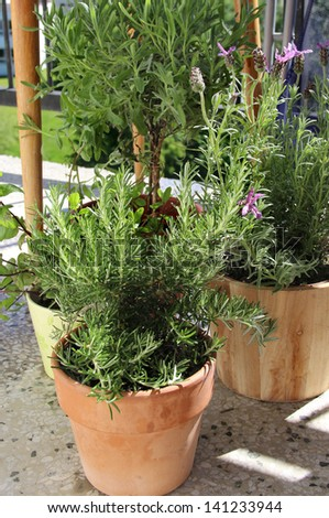 Rosemary, mint, lavender and other herbs in the pot - stock photo