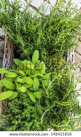 Rosemary, sage, thyme and lemon thyme - stock photo