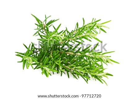 Rosemary sprig  isolated on white - stock photo