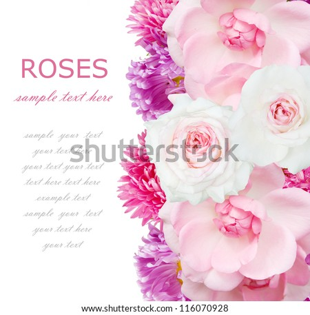 Roses and asters background isolated on white with sample text