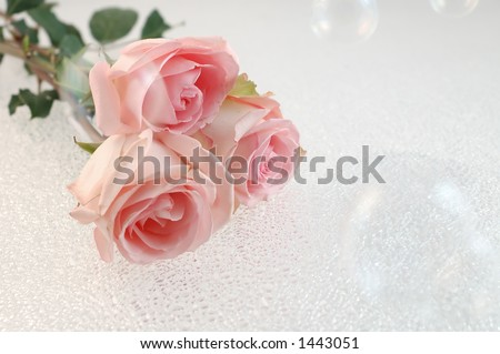 Roses and Bubbles - stock photo