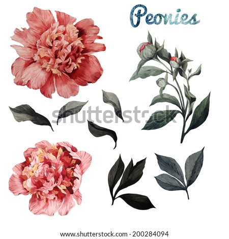 Roses and leaves, watercolor, can be used as greeting card, invitation card for wedding, birthday and other holiday and  summer background - stock photo