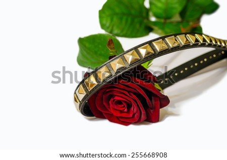 roses and spikes - stock photo
