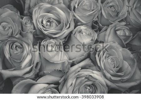 Roses background. Aged photo. Haze effect. Black and white. - stock photo