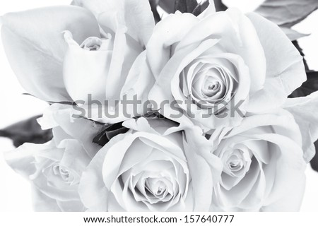 Roses bouquet in monochrome