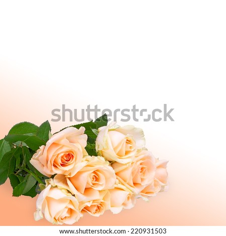 Roses bouquet isolated; beautiful floral abstract background