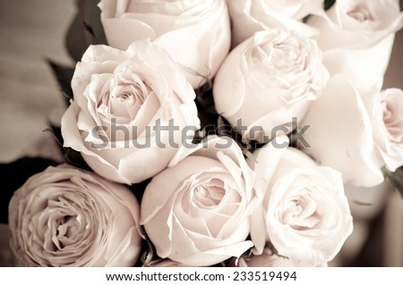 Roses close up - stock photo