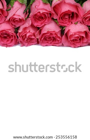 Roses flowers on birthday, mother's or Valentine's day isolated with copyspace - stock photo