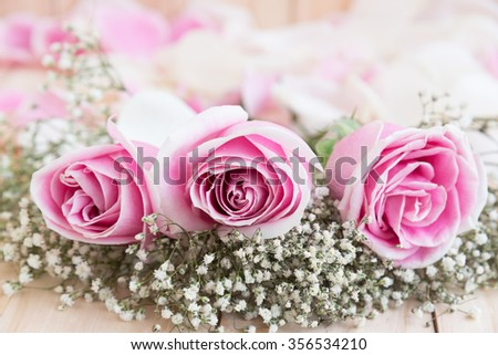 roses for lover, beautiful flower, love concept for valentines day, wedding, anniversary and birthday - stock photo