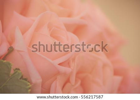 Roses for Valentine's Day background