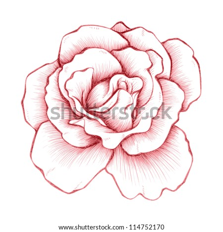 Roses (Hand Drawn)