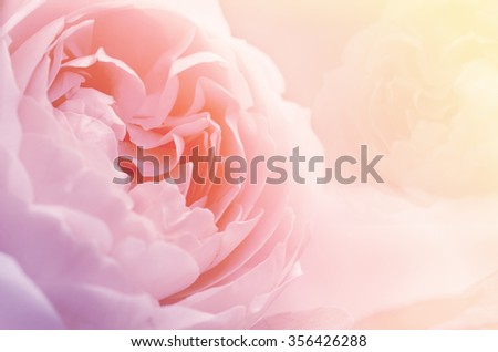 Roses in Soft Pastel Tone. - stock photo