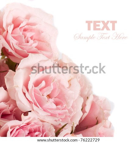 Roses Isolated