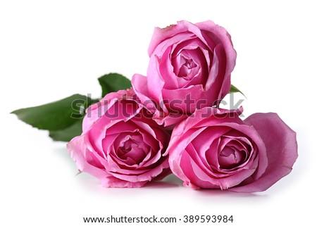 Roses isolated on white - stock photo