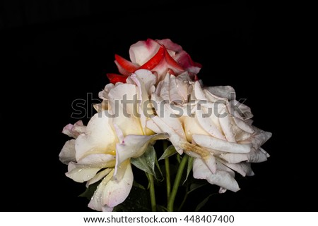 roses on a black background