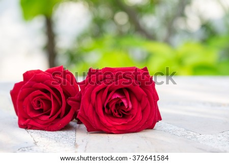 Roses  on the marble table. - stock photo