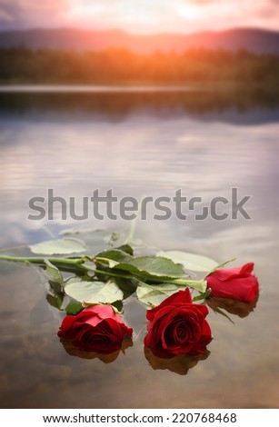 Roses on the water - stock photo