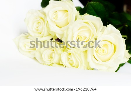 roses on the white background