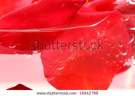 roses petals on a white background in a glass vase