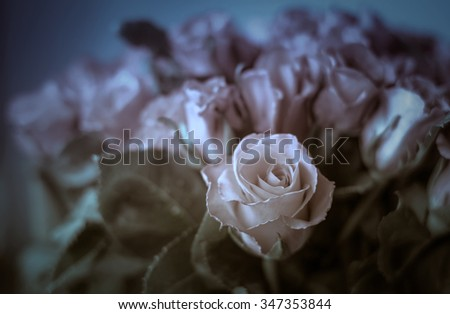 Roses with filter effect  concept disappointed of love, vintage background   - stock photo