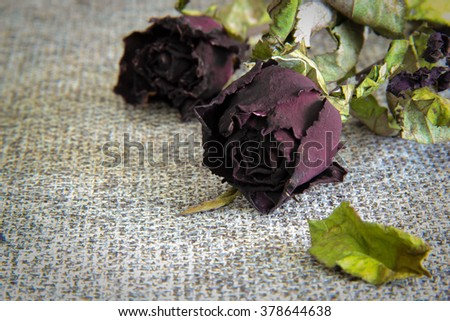 Roses wither,late Valentine