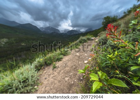 Rosy Paintbrush Flowers growing near the hiking trail to Bierstadt Lake with view of The Continental Divide Rockies Colorado - stock photo