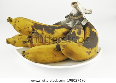 Rotten banana with fungus on white background - stock photo