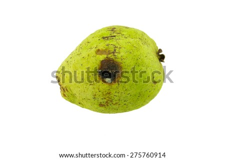 Rotten guava fruit isolated on white background - stock photo