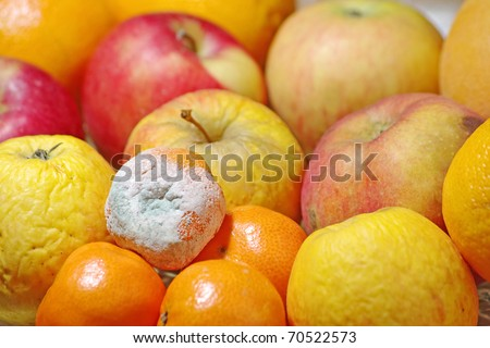 Rotten mandarin and other fruits - stock photo