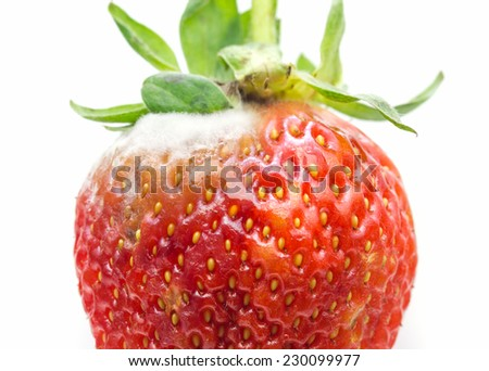 Rotten strawberries over white background