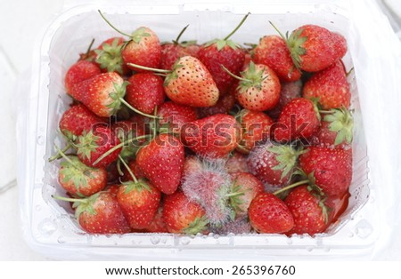 rotten strawberry by white mycelium of contaminated fungus  - stock photo