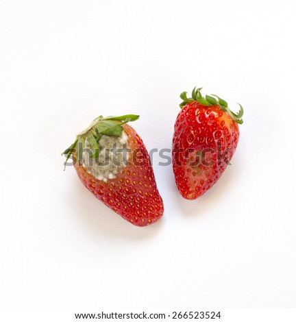 Rotten strawberry isolated on white background - stock photo