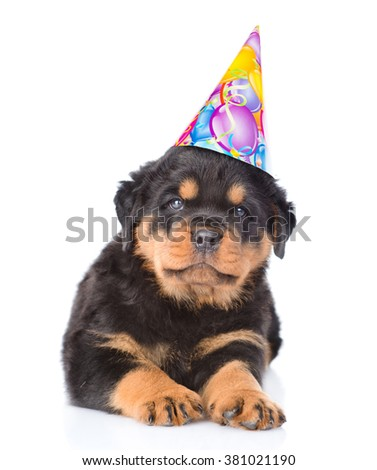 Rottweiler puppy in birthday hat. isolated on white background - stock photo