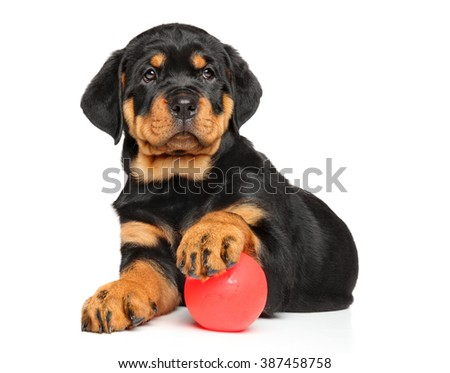Rottweiler puppy lying down with a ball on white background - stock photo