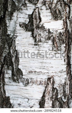 Rough brown bark of the tree. Backgrounds - stock photo
