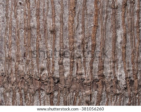 rough light brown surface texture of a betel palm tree under natural sunlight - stock photo