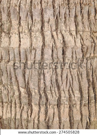 rough light brown surface texture of a coconut tree under natural sunlight - stock photo